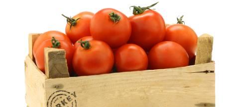 Alles weten over tomaten? Je kunt erover leren terwijl ze op je bord liggen
