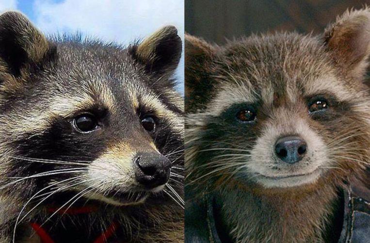 Oreo (links) en personage Rocket (rechts).