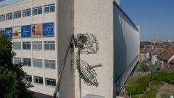Street artist ROA siert gevel van het nieuw wetenschapsmuseum in Gent