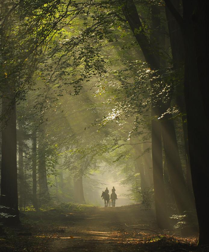 Deze foto van Nelleke Pieters, gemaakt in het Speulderbos, siert de cover van het fotoboek over Ermelo.