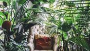 Tips om je planten een (Pinterestperfecte) plaats in huis te geven