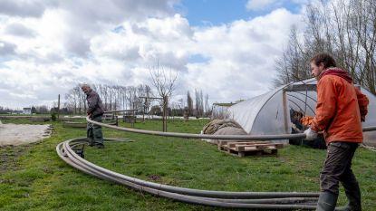 """Brandweerzone Rivierenland ook vandaag nog druk in de weer door storm:  """"1.400 meldingen, dat is uitzonderlijk"""""""
