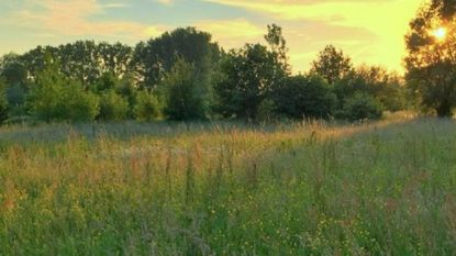 Natuurgebieden krijgen 15 hectare bij