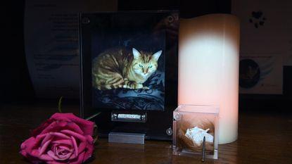 Dierenbeul in Kortenberg: katje Rambo eet worst met nagel in en sterft