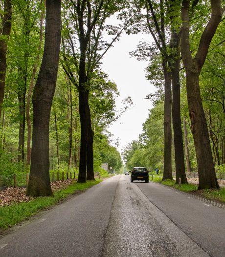 Werk Rucphenseweg uitgesteld, maar bomen worden wel gekapt