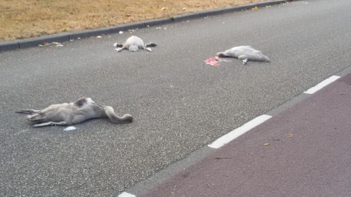 De chauffeur die de drie jongen zwanen aanreed, reed door zonder te stoppen.