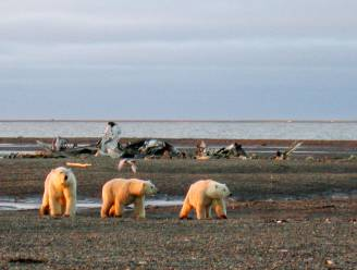 Tsunamiwaarschuwing na zware aardbeving voor kust van Alaska