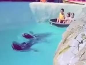 """Une vidéo polémique montre des otaries tractant un bateau au Mont Monsan: """"J'ai reçu des menaces de mort"""""""