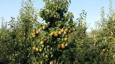 Huisvesting fruitplukkers Reimerswaal moet veiliger