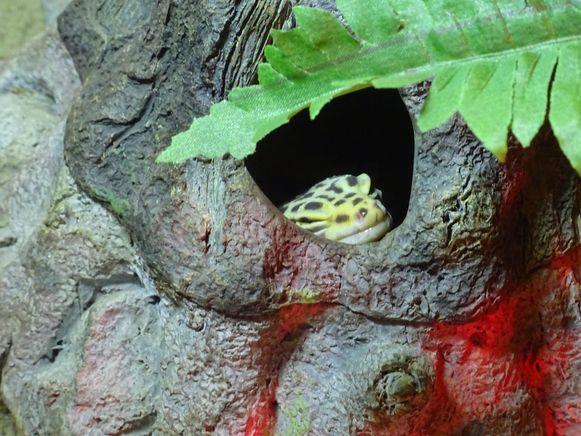 Nieuwe dieren voor dierenopvangcentrum De Zonnegloed