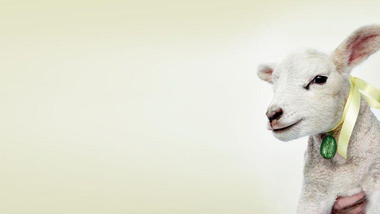 De speurtocht stond dit jaar in het teken van schapen en lammetjes Beeld Rein Janssen
