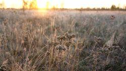 Stilaan droger weer, vannacht gaat het overal vriezen: -10 graden in Ardennen