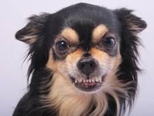 Eigenaar meldt zich nadat hond Hengeloër bloedende kuitwond bijt