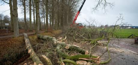 Deze 167 bomen in de gemeente Oldebroek halen de kerst van 2020 niet