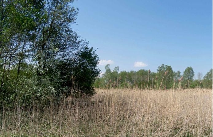 Het terrein aan de Groenewoudseweg in Zeewolde waar het Zonnewoud komt.