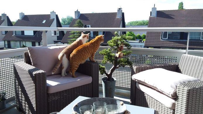 Zie jij wat ik zie? Katten Bram en Moos gaan voor het eerst samen naar buiten. Ze keken hun ogen uit.