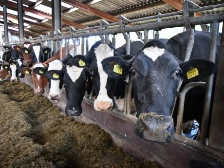 LTO erkent aandeel in schuld mestdrama: 'Boeren zijn gigantisch in de knel gekomen'