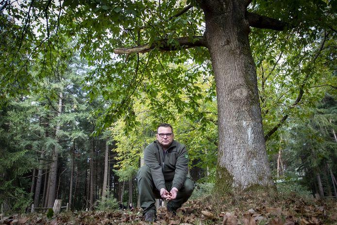 Boswachter Kees Jan Westra van Staatsbosbeheer bij een tamme kastanje op een dagrecreatieterrein bij Holten. De boom kan beter tegen de droogte en maakt daarom deel uit van het bos van de toekomst.