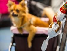 Honderden baasjes op zoek naar kerstoutfit of ander cadeau voor de hond