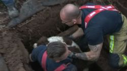 Mirakel: brandweer haalt hond 'Meisje' na vijf uur durende reddingsactie uit riolering