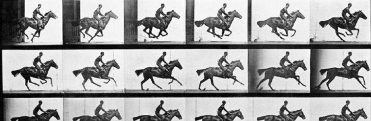 Galopperend paard. In 1887 publiceert Muybridge zijn studie Animal Locomotion. (Eadweard Muybridge, Fotoarchief Rijksmuseum) Beeld