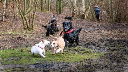 Hondenlosloopweide Sport Vlaanderen krijgt plaats aan ingang A