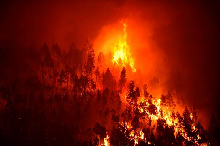 Klimaatopwarming, menselijke aanwezigheid, kwaad opzet en onbedachtzaam bosbeleid: de bosbranden in Portugal kennen veel mogelijke verklaringen.