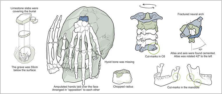 Eem schematische weergave van de botten. Beeld Plos One/Gil Tokyo