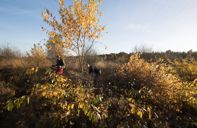 De Eder Heide in de herfstzon.