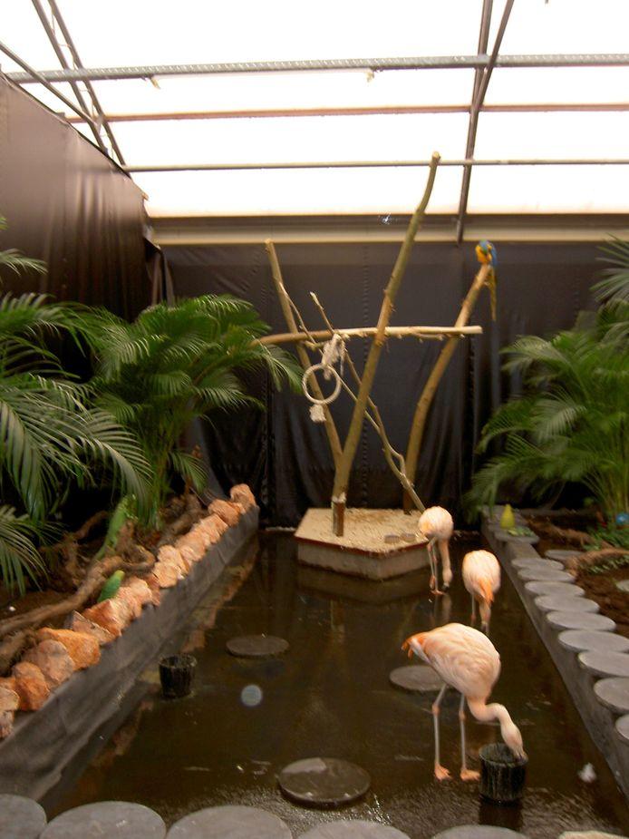De flamingo's, hier op een foto uit 2008.