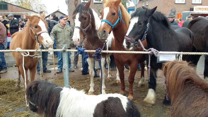 Paarden aan een lijntje.