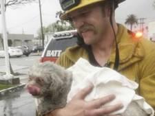 Brandweerman redt hond met mond-op-snuitbeademing