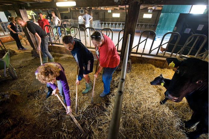 Leerkrachten van het Olympus College doen vrijwilligerswerk in de stadsboerderij de korenmaat