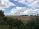 In glastuinbouwgebied Bathpolder bij Rilland wil Engie een biovergister bouwen.
