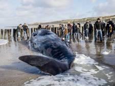 Leerlingen Veerse basisscholen op zoek naar  potvissen en plastic