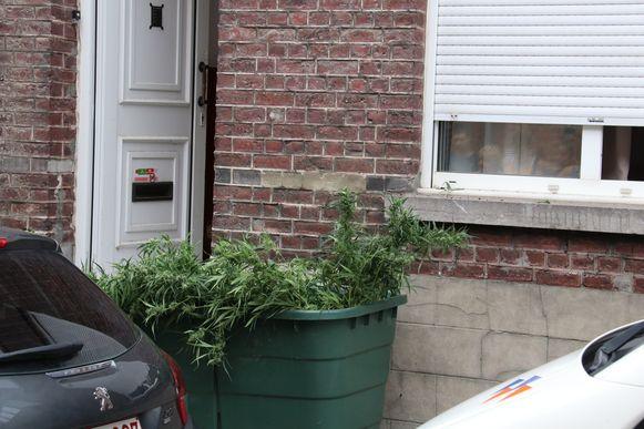 De planten werden allemaal uit de woning gehaald.