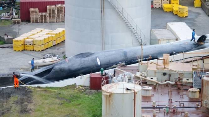 """Experts reageren met afschuw nadat walvisjagers """"per ongeluk"""" beschermde blauwe vinvis doden"""
