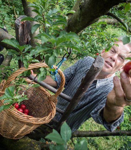 Enige krozenboomgaard van Nederland gaat bomen verkopen