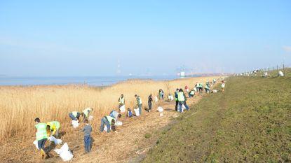 Havenbedrijf zet mee schouders onder Zeelands initiatief Schone Schelde