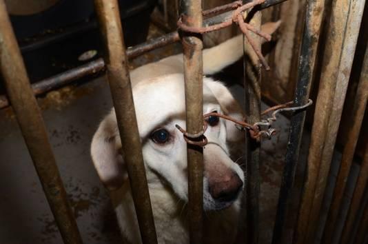 Bij de hondenfokker werden honderd honden in beslag genomen.