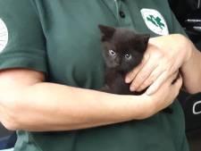 Politie redt katje dat vast zat onder motorkap in Amersfoort