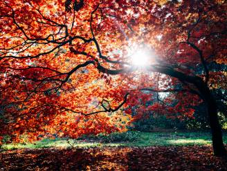 """Wat we kunnen leren van de herfst: """"Eekhoorns slaan beukennootjes op. Wij kunnen dat symbolisch doen"""""""