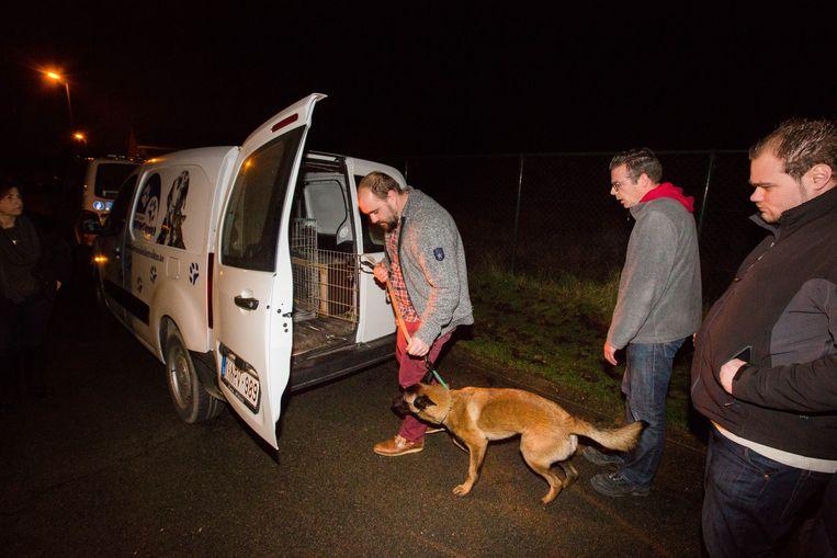 De hond wordt opgehaald door het asiel.