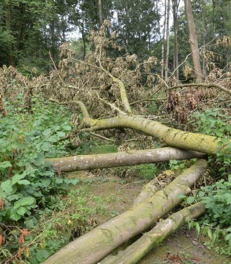 Kap van laanbomen in buitengebied Oude IJsselstreek gaat niet door