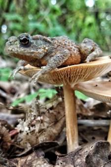 Perfecte timing! Pad rust uit op eigen 'stoel' in Spijkenisser bos