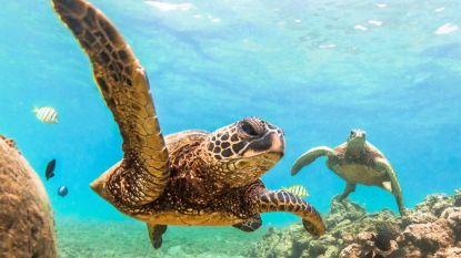 """Ruim helft schildpaddensoorten bedreigd"""
