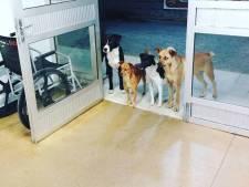 Trouwe honden verrassen dakloos baasje dat in ziekenhuis belandde