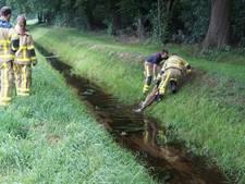 Reebokje verdronken in Aaltense sloot
