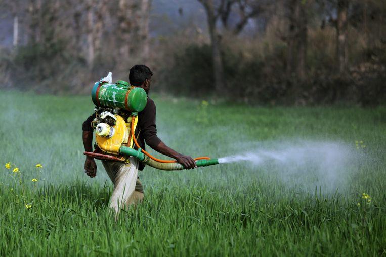 Een Indiase boer besproeit zijn gewas met pesticide, nabij het dorp Kathunangal. Beeld EPA