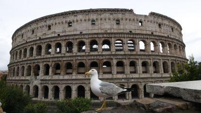 Meeuwen in Rome beginnen opnieuw op ratten en duiven te jagen doordat ze door lockdown verhongeren